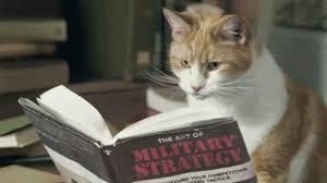 Cat Reading.jpg